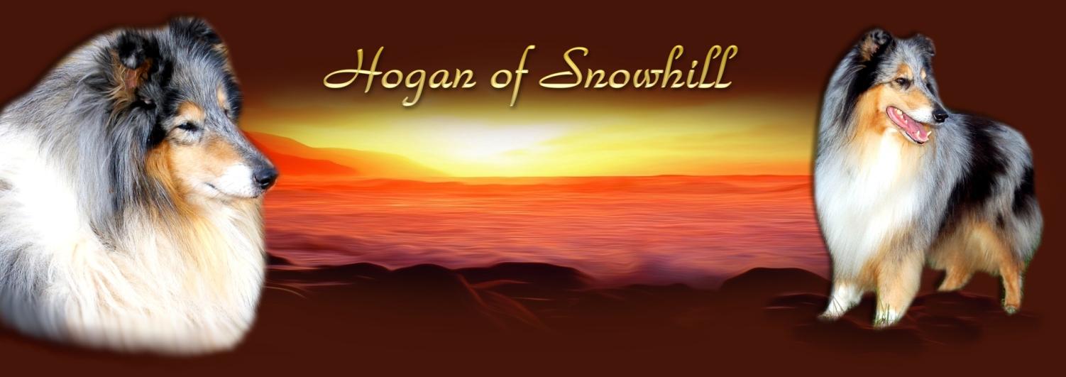 Mein Seelenhund Hogan!!!